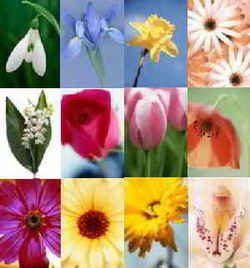 Birth Flowers Birthstones Month Color Meaning