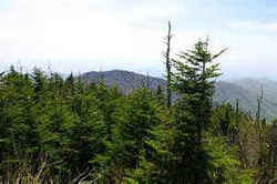 Clingmans Dome: 6,643 feet