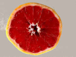 texas state fruit fruit names