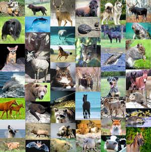 U.S.Mammals
